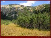 Le Parc National Retezat dans les Carpates ; la nature roumaine classée à l'UNESCO 28