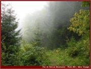 Le Parc National Retezat dans les Carpates ; la nature roumaine classée à l'UNESCO 15
