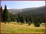 Le Parc National Retezat dans les Carpates ; la nature roumaine classée à l'UNESCO 37