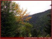 Le Parc National Retezat dans les Carpates ; la nature roumaine classée à l'UNESCO 5