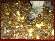 Le Parc National Retezat dans les Carpates ; la nature roumaine classée à l'UNESCO 8