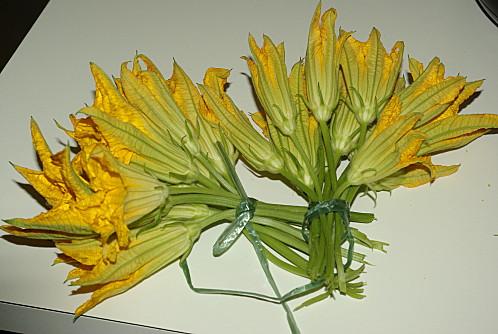 fleurs courgette