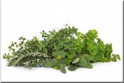 bouquet herbes