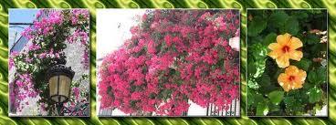fleurs andalousie