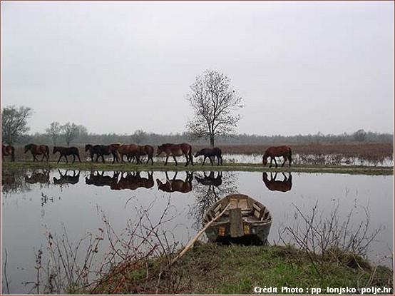 lonjsko polje sava chevaux