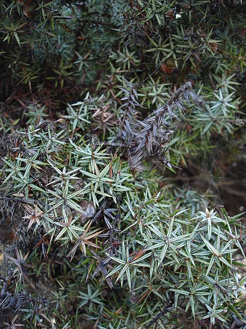 Cyclades Naxos vegetation