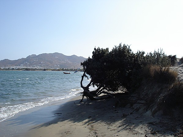cyclades naxos arbre plage