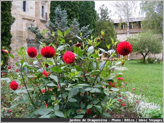 dragomirna jardin dalhia