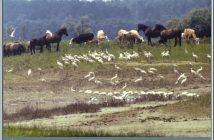 lonjsko polje reserve naturelle
