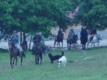 chevaux mrzlingrad