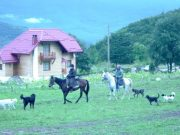 mrzlingrad chevaux