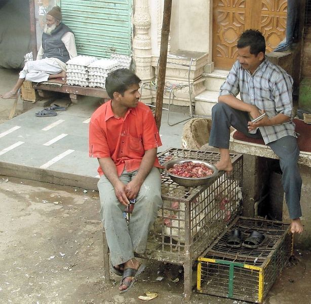 rajasthan vendeur poulets