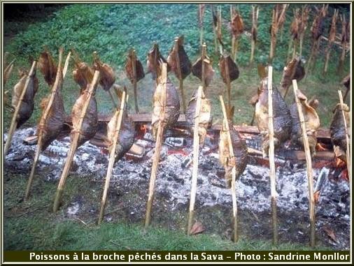 poissons pêchés dans la rivière Sava rôtis sur la broche
