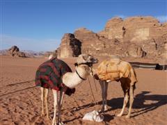 jordanie desert wadi rum