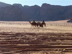 jordanie wadi rum chameaux