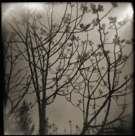 arbre branches automne