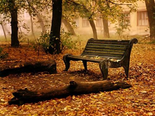 automne feuilles et banc