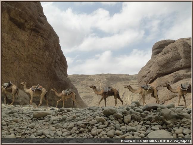 caravanes chameaux ethiopie afar