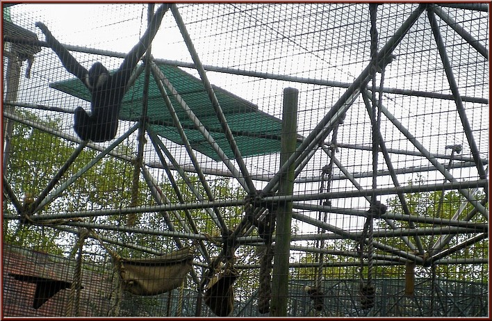 zoo londres singes