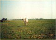 Hortobagy grande plaine hongrie puszta