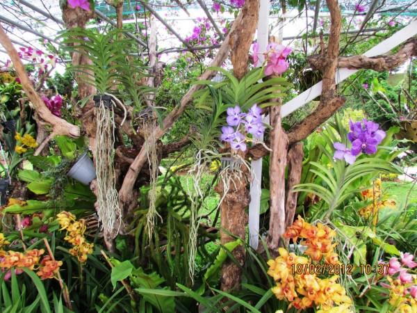 dalat orchidees racines