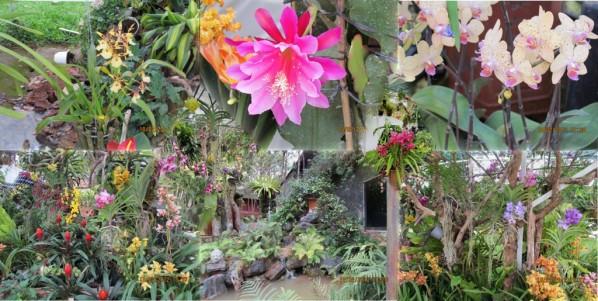 Visiter Dalat entre la ville des fleurs et la ferme du café de civette