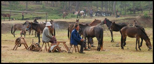 chinois et chevaux