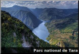 parc national tara serbie