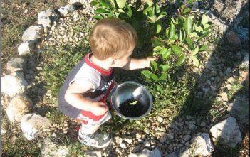 agrotourisme krka galic enfant recolte