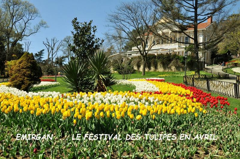istanbul au printemps festival des tulipes
