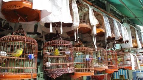 hong kong marche des oiseaux
