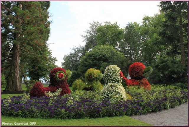 Bodensee blumeninsel fleurs
