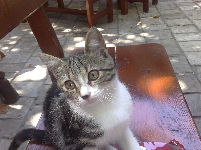 bianca chat montenegro