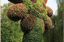 blumeninsel fleurs