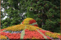 blumeninsel paon fleurs