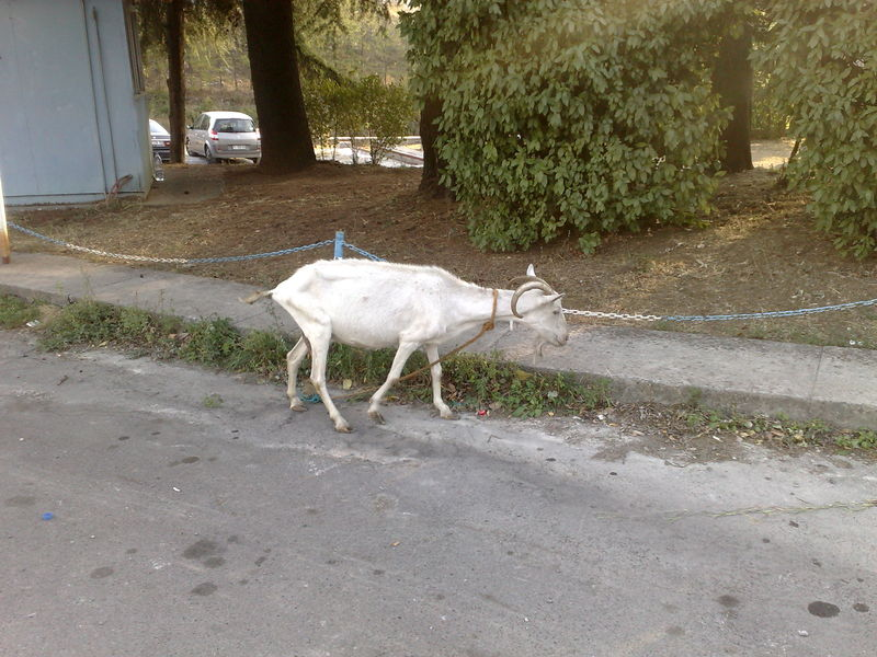 chevre route montenegro
