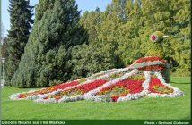 ile mainau paon en fleurs
