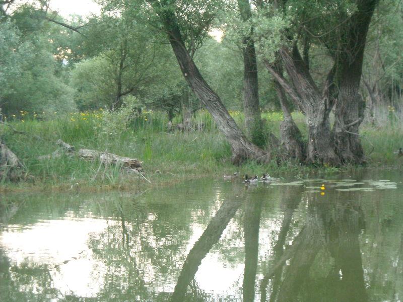 lac skadar arbre dans leau