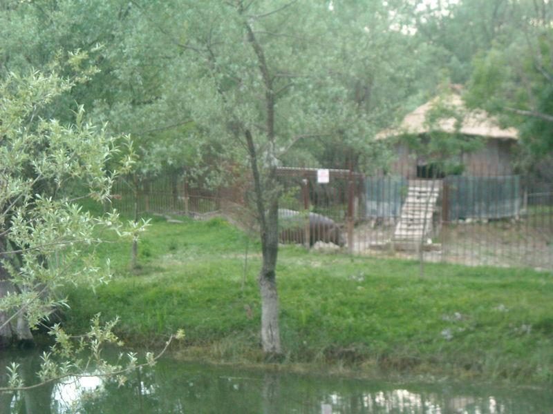 lac skadar hippopotame