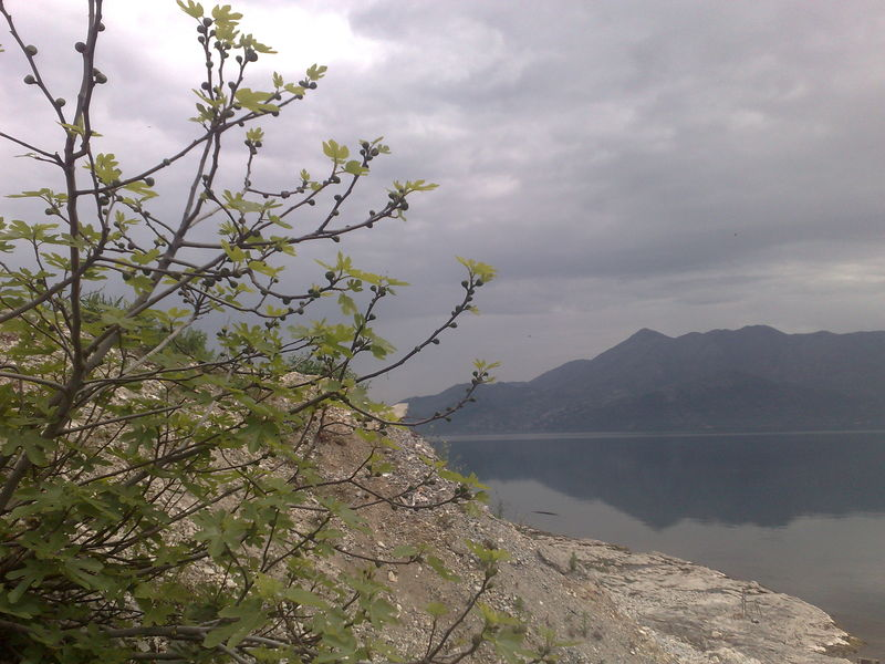 lac skadar rives
