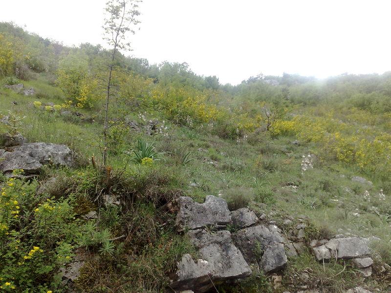 lac skadar vegetation