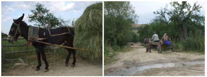 Bulgarie rurale
