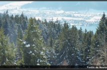 neureuth forets