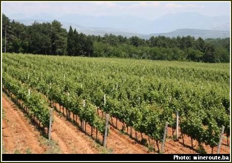 vignobles bosnie