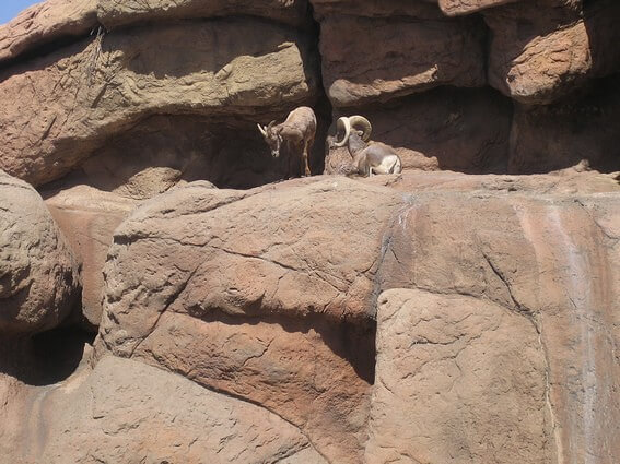 Animaux Sodoran Desert Museum