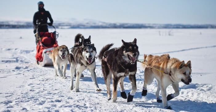 aventure grand nord
