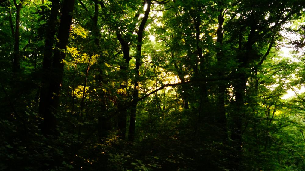 Comana arbres de la réserve naturelle