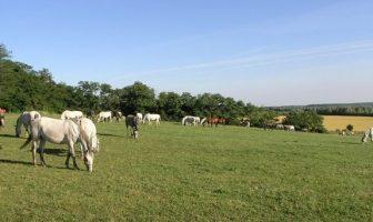 croatie chevaux lipizzan
