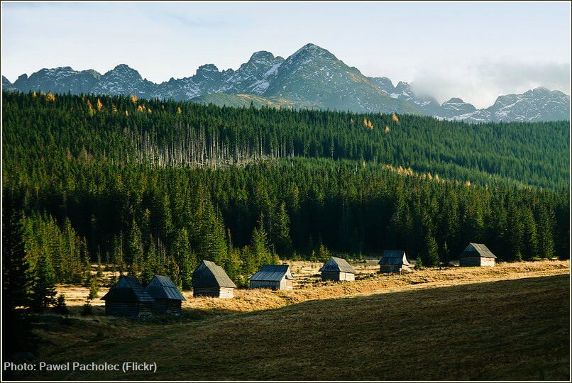 forets et cabanes dans  le parc des tatras polonais pres de zakopane