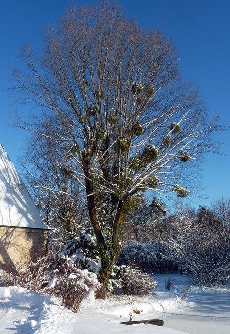 Muenchen Westfriedhof arbre sous la neige